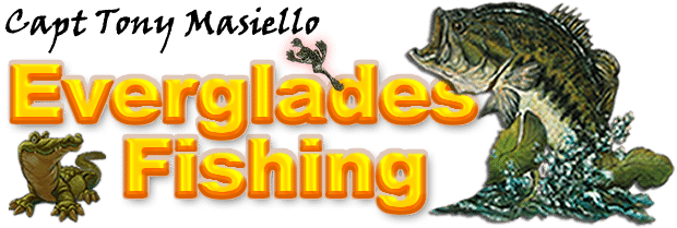 Everglades Fishing | South Florida